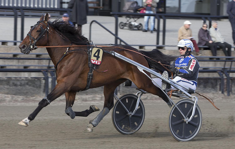 Massiv Suksess For Kristiansand-hest