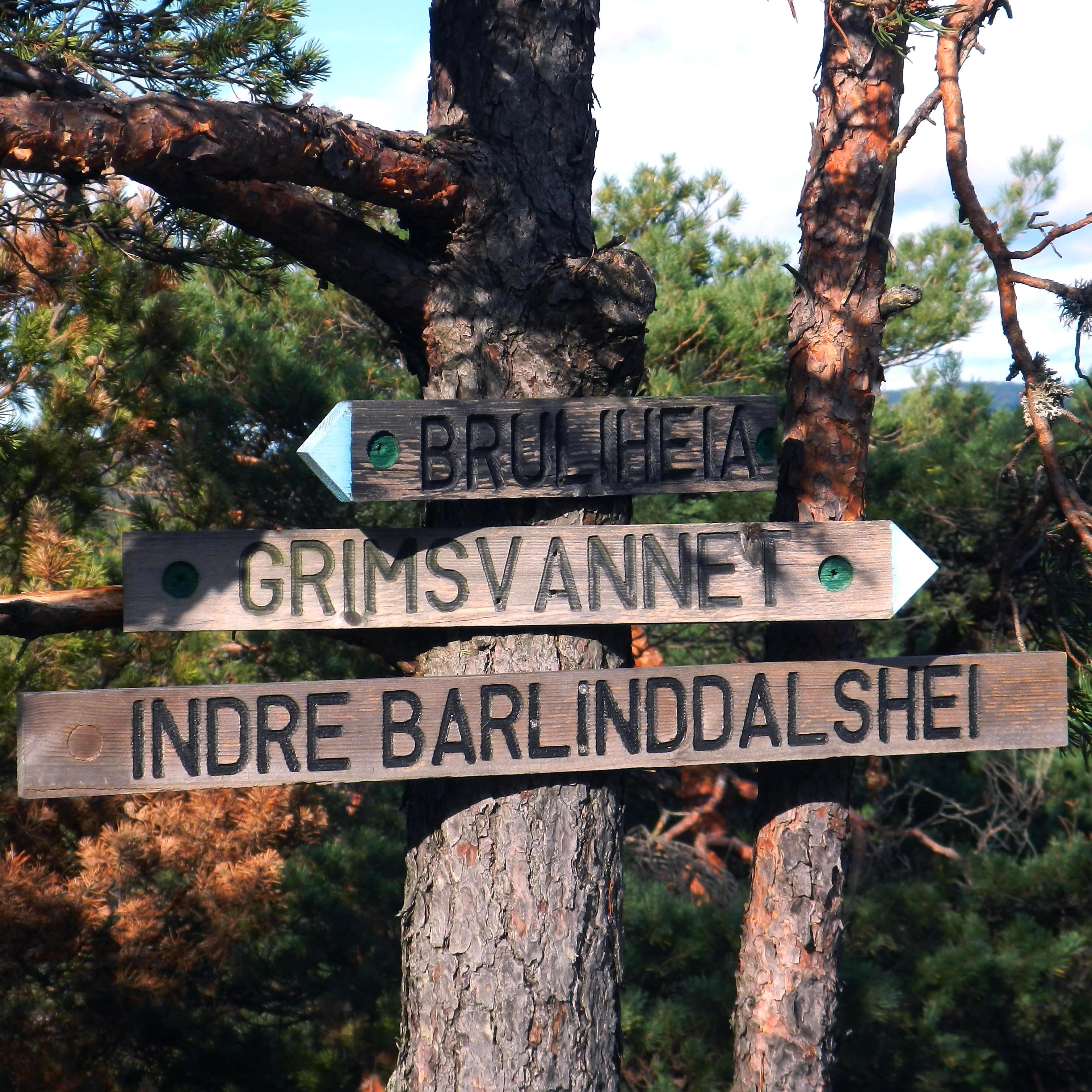 Ti På Topp 2019 –  Årets Topp Nr. 1 Indre – Barlindalshei I Vågsbygdskogen