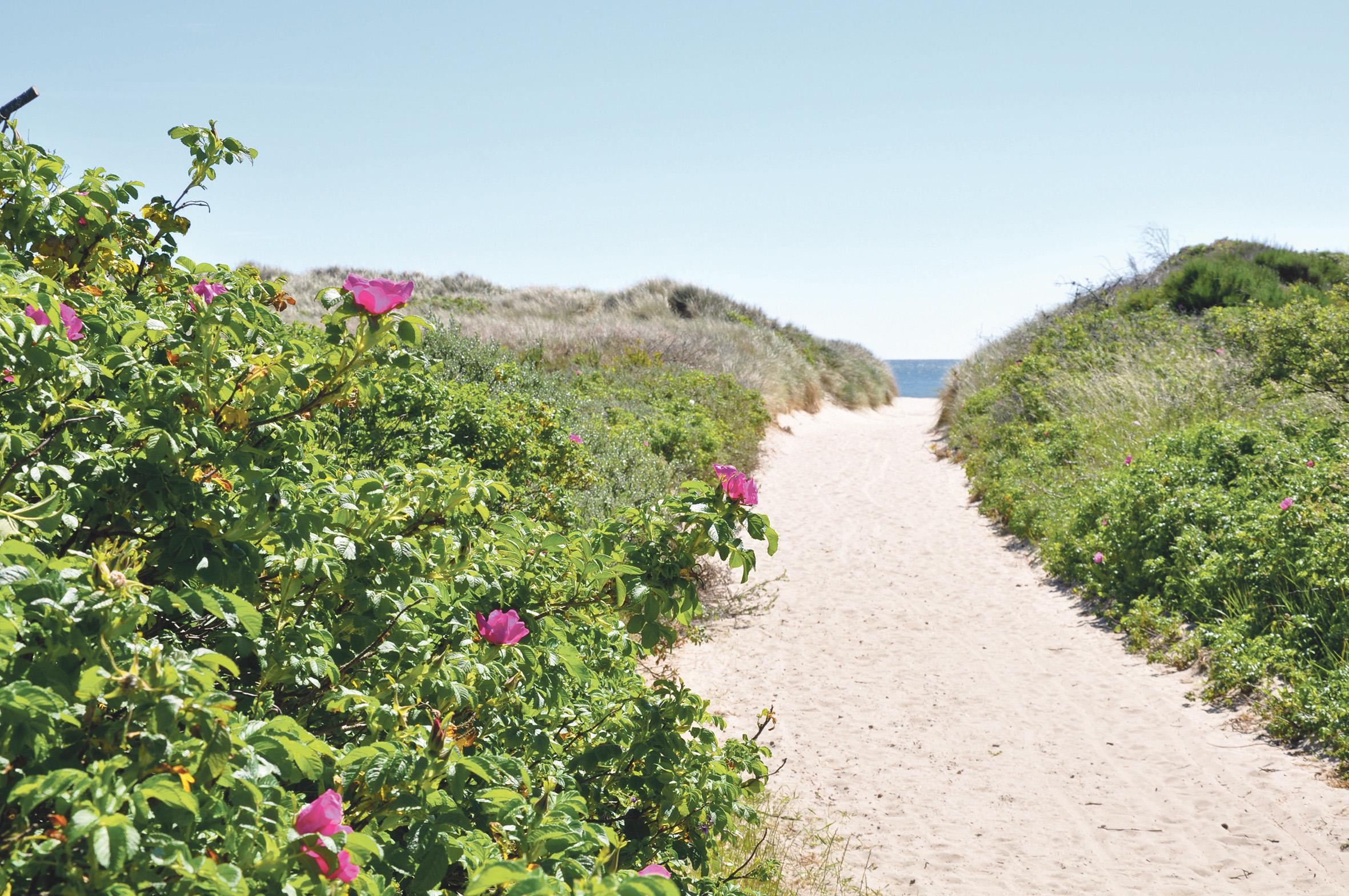 TUR: Området Tilbyr Gode Turområder Rett Utenfor Døren. Foto: Skagen Strand Feriesenter