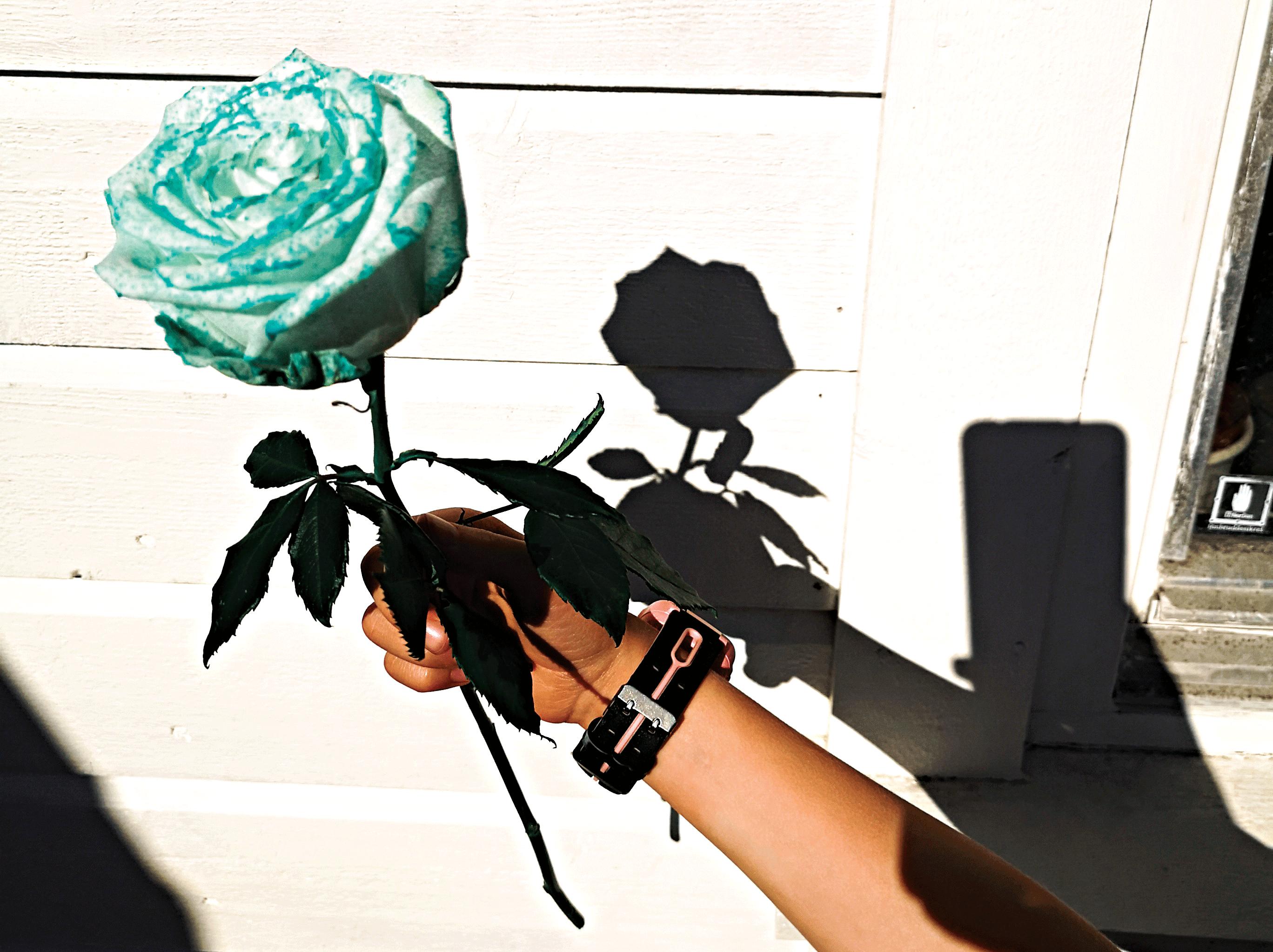 Rose-eksperiment